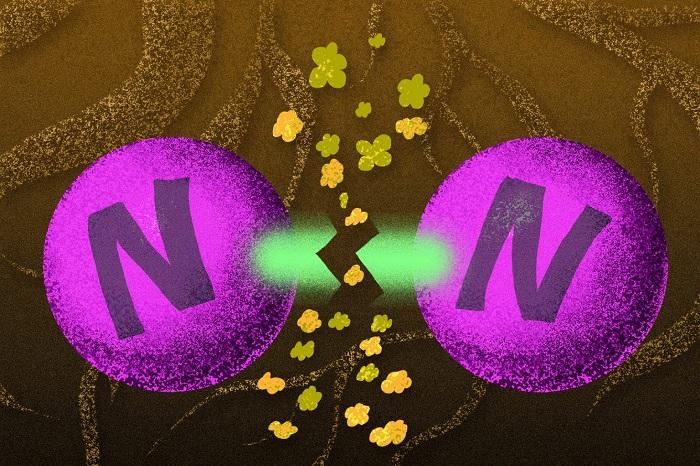 Metaller, Dayanıklı Azot-Azot Bağlarını Zayıflatmak için Nasıl İşbirliği Yapıyorlar