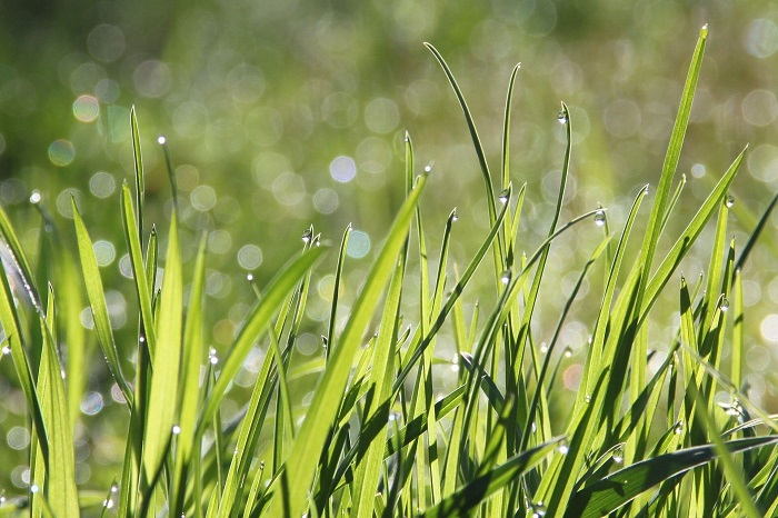 Çim, Paket Servis Gıda Ambalajlarında Plastiğin Yerini Alıyor
