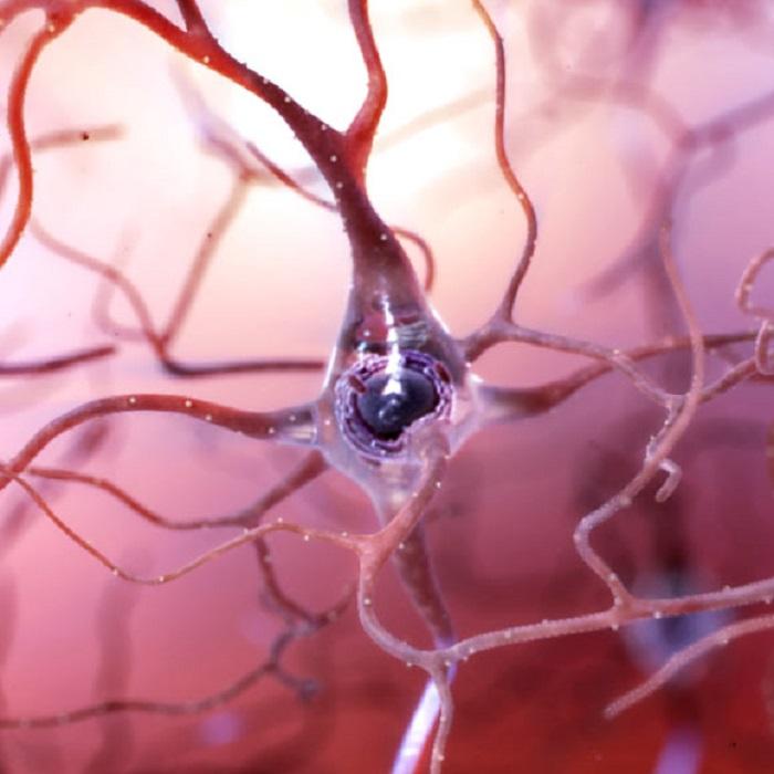 Kronik Psikososyal Stres: Alzheimer Hastalığına Yol Açabilir mi?