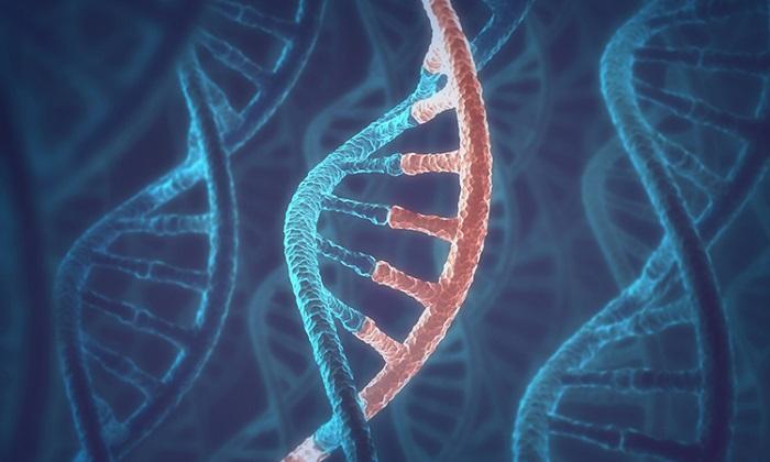DNA'ya RNA Mesajları Yazabilen Polimerazlar