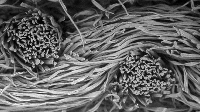 Mikroskobik Görüntüler, Maskelerin Bilimini ve Güzelliğini Ortaya Çıkarıyor