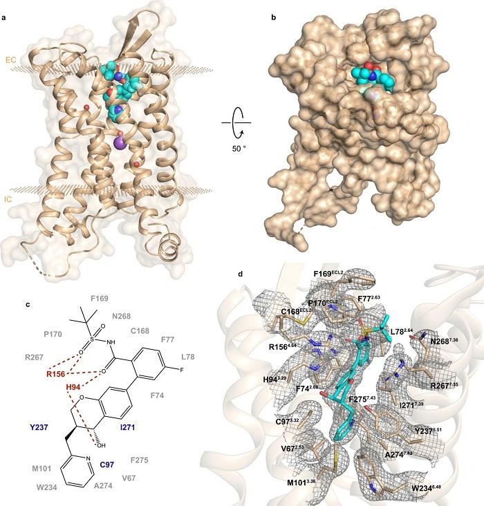Tip 2 Diyabette Rol Oynayan Proteinin Yapısı ve İşlevi Keşfedildi!