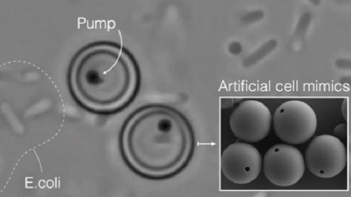 Canlı Hücrelerin Temel Fonksiyonlarını Taklit Edebilen Yapay Hücre Üretildi