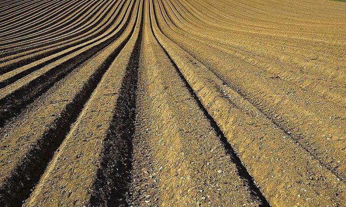 Fosfor Tedarik Etme Zinciriyle İlgili Raporsuzluk, Küresel Gıda Güvenliği için Tehlikeli