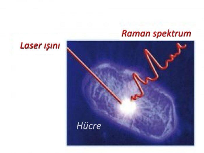 Lazer Işığı Altında Hücre Kimyası